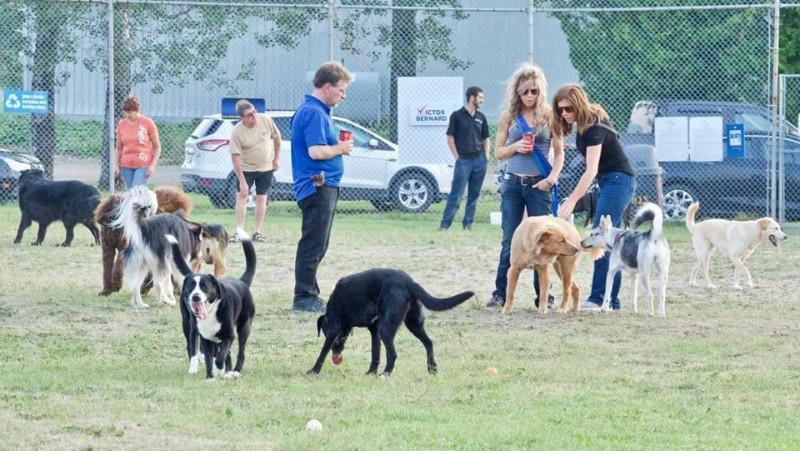 Edward-Poirier-Dog-Park-1